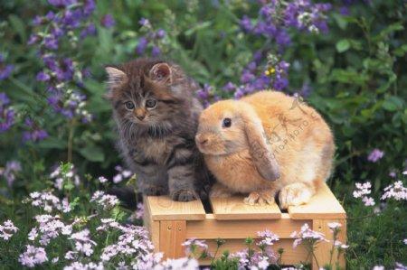 动物猫小猫小猫图片小猫猫