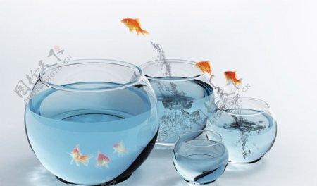 跳跃的金鱼素材图片