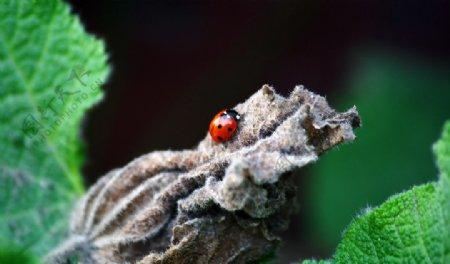 摄影图库生物世界昆虫图片