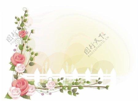 玫瑰花藤图片