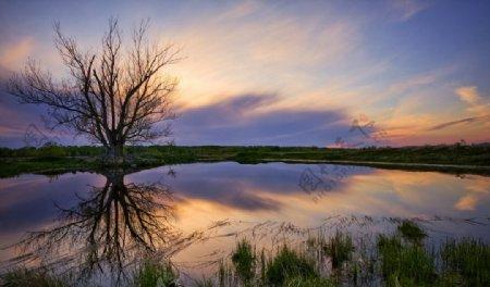 自然景观摄影图库高清桌面枯枝图片