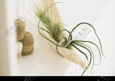 室内绿化和花草0087
