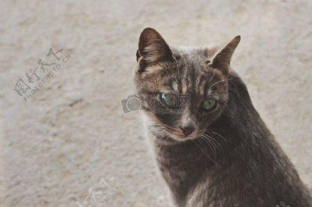 动物宠物毛皮小猫猫