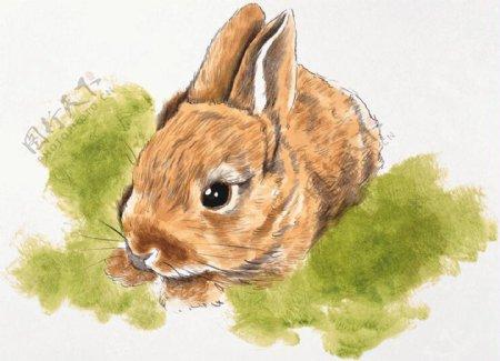 松鼠家禽家畜动物插图26