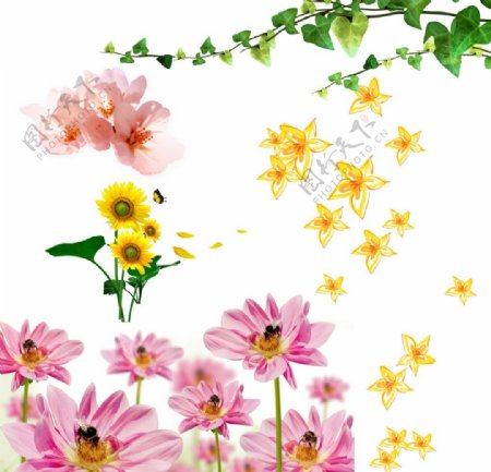 爬山虎藤向日葵桃花
