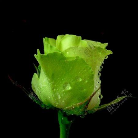 位图写实花卉植物摄影花卉免费素材