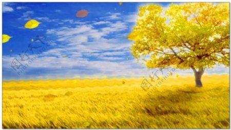 金色田野大树视频素材