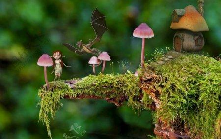 蘑菇屋另类风景