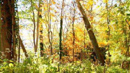 生态森林公园草木阳光