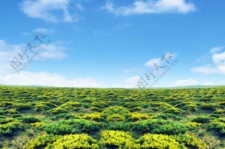 藏锦鸡儿自然保护区