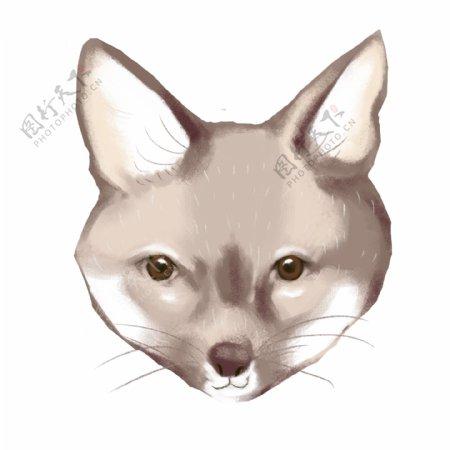 可爱小狗狐狸狗灰色