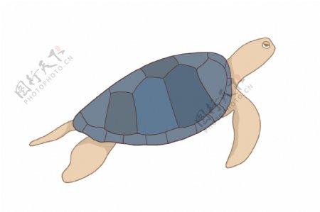 海洋动物海龟乌龟