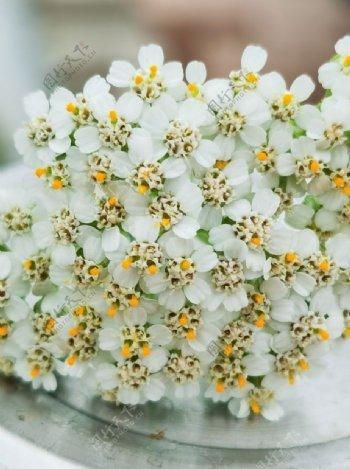 好看的花儿