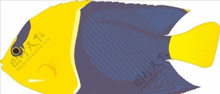双色鱼手绘矢量海洋鱼