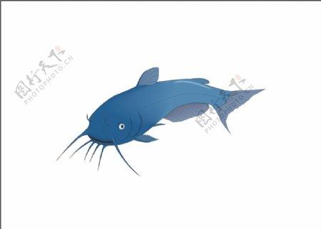 鲶鱼矢量海洋鱼CDR