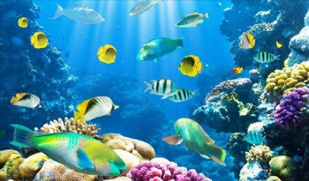 海洋世界珊瑚鱼类背景墙图片
