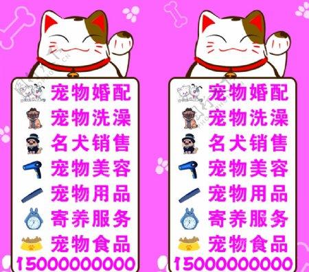 招财猫经营项目宠物图片