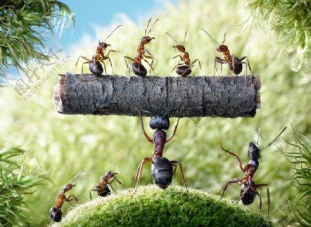 蚂蚁搬家图片
