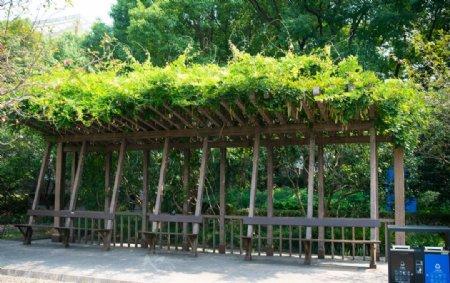 户外木架藤蔓景观图片