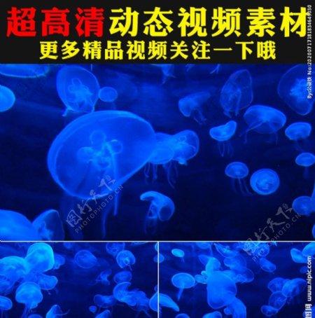 荧光水母游动特写视频素材
