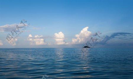 海洋海水简约背景海报素材图片