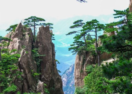 山顶迎客松旅行旅游背景海报素材图片