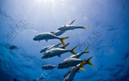 海洋鱼类摄影图片