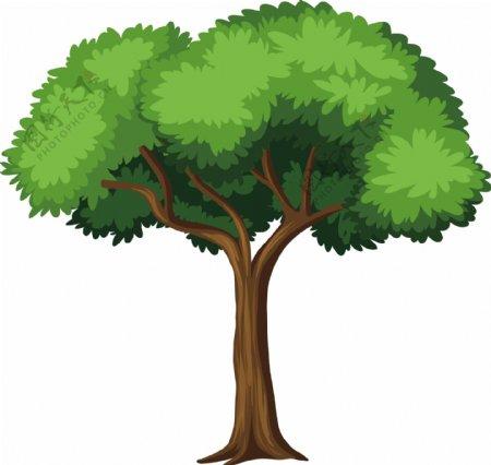 大树矢量图图片