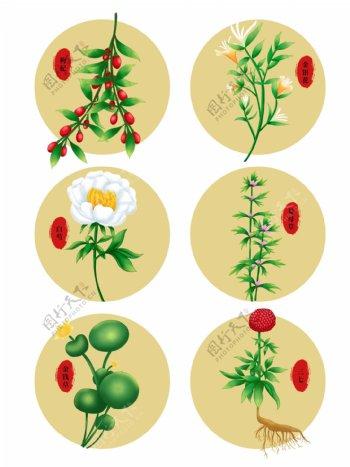 中国传统草本中药植物图片