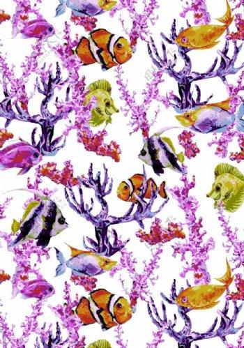 珊瑚和鱼图片