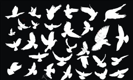 矢量白鸽图片