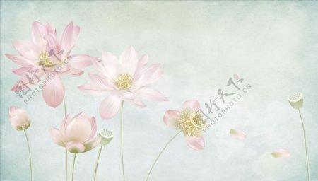 荷花莲蓬花瓣背景墙图片