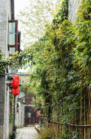 春天下雨后绿色竹子古风图片