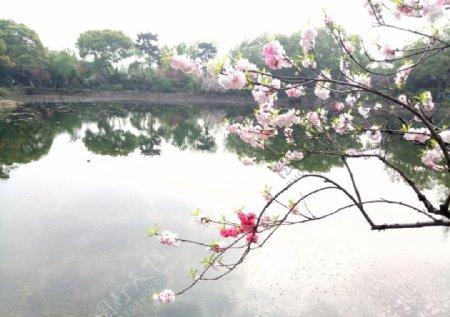 桃花园林图片
