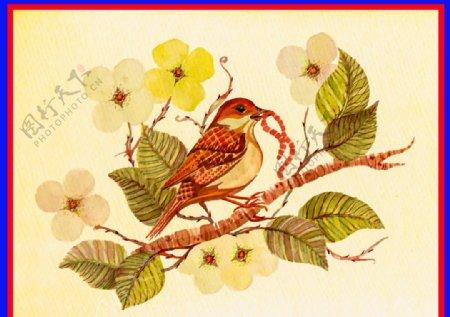 麻雀小鸟图片