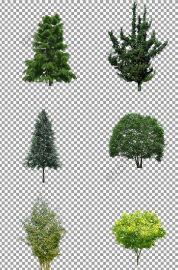 茂盛的大树图片