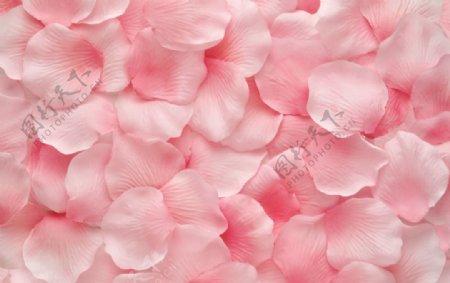 粉色玫瑰花瓣图片