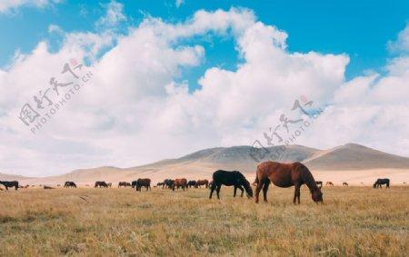 草原上的一群骏马图片