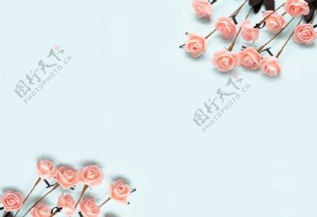 浅蓝色底板上的粉色玫瑰拍摄素材图片