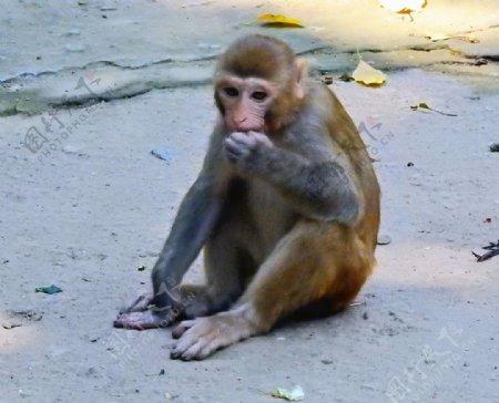 猴子特写照片图片
