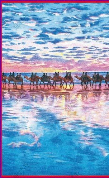 骆驼海洋图片