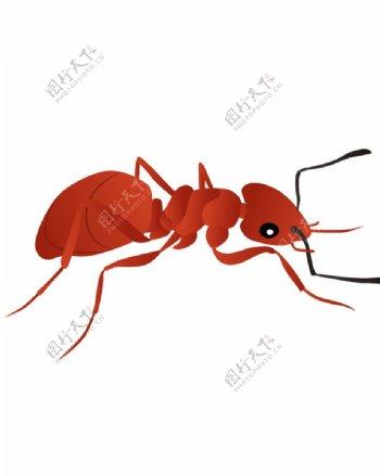 蚂蚁素材图片