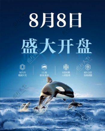 海豚鲸鱼开盘背景海报图片