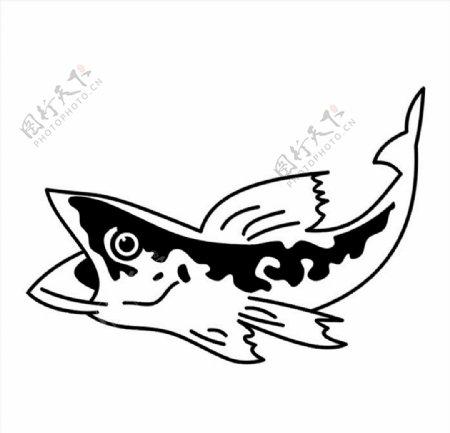 黑鱼矢量图图片