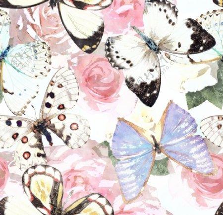 梦幻蝴蝶图片