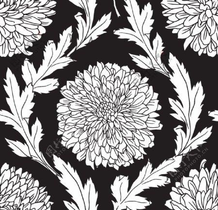 线稿菊花图片