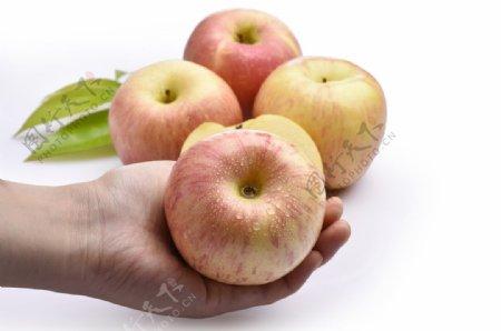 高清苹果摄影图片