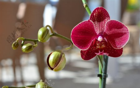 清新漂亮的玉兰花图片