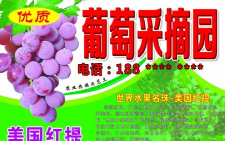 葡萄采摘园图片