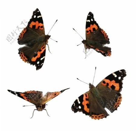 蝴蝶抠图图片